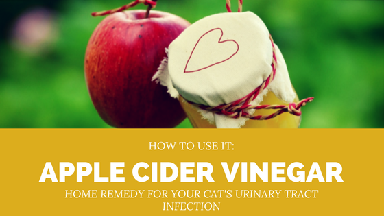 apple cider vinegar acv for cat uti