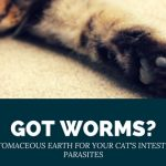 Diatomaceous Earth for Cats: A Natural Dewormer