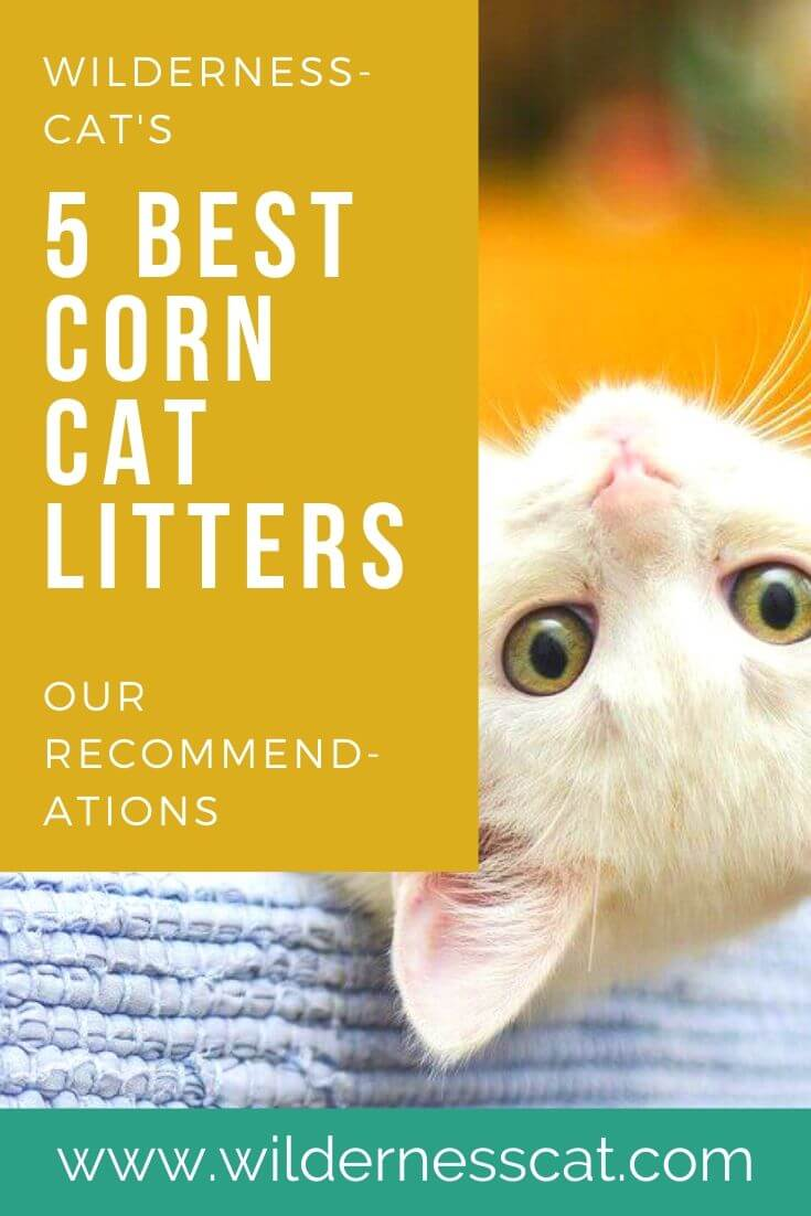 best corn cat litter pin