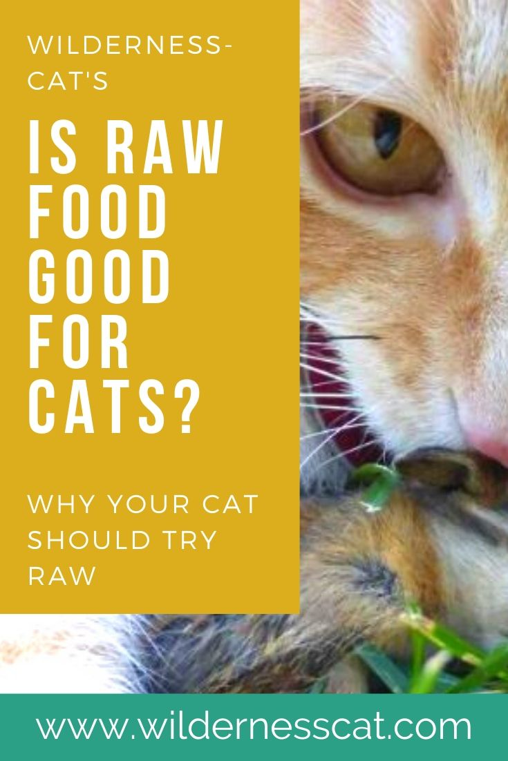 is raw cat food good for cats pin 1