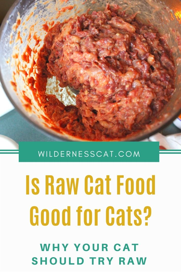 is raw cat food good for cats pin 2