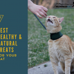 7 Best Healthy Cat Treats – Natural Treats for Cats