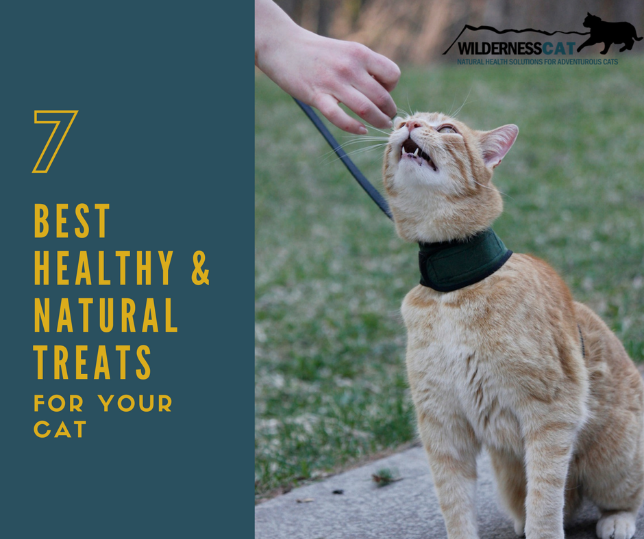 7 Best Healthy Cat Treats: Our Favorite Natural Treats for Cats