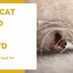 Dry Cat Food and Feline Urinary Disease: Is Dry Food Bad for Cats?