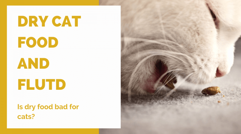 Dry cat food and feline urinary disease banner