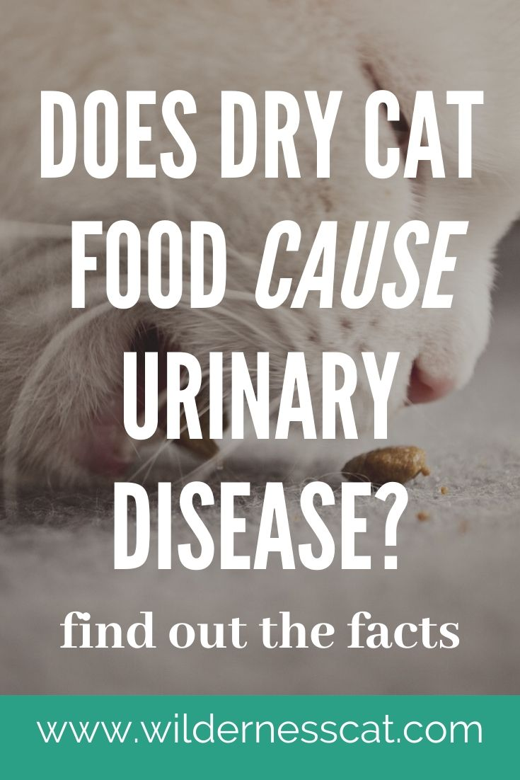 Dry cat food and feline urinary disease