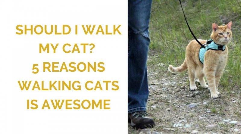 Should I walk my cat on a leash