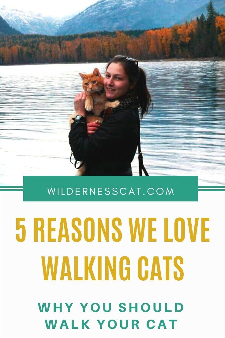 Should I walk my cat pin 2