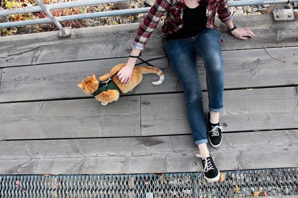 Eileen and Wessie sitting on bridge cat walking