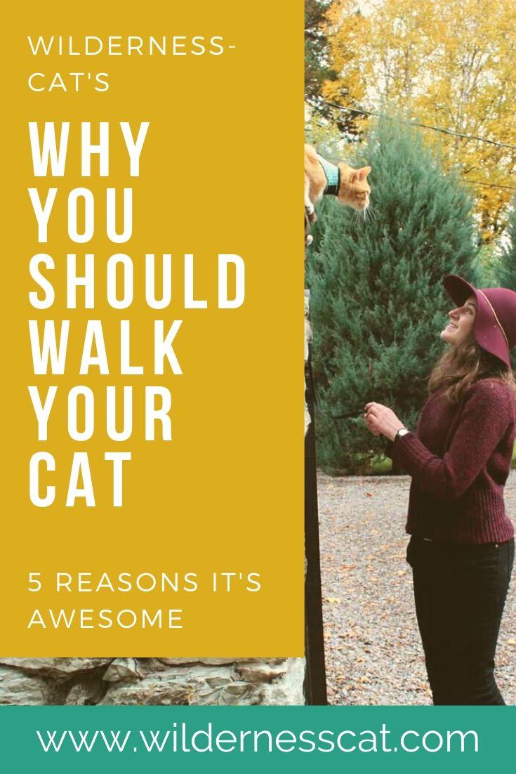 Should I walk my cat pin 1
