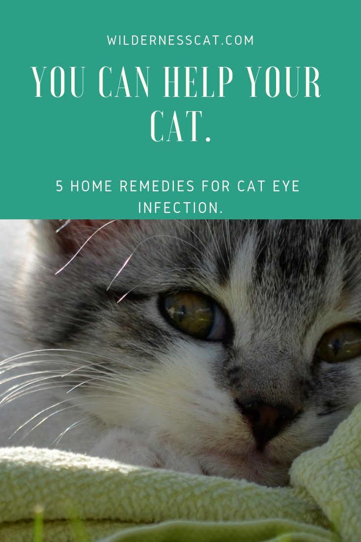 Cat eye infection pin 2