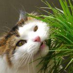 Should You Let Your Cat Eat Grass?