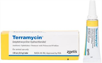 Terramycin ophthalmic ointment for cat eye infection
