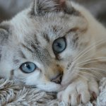 Home Remedies for Cat Eye Infection