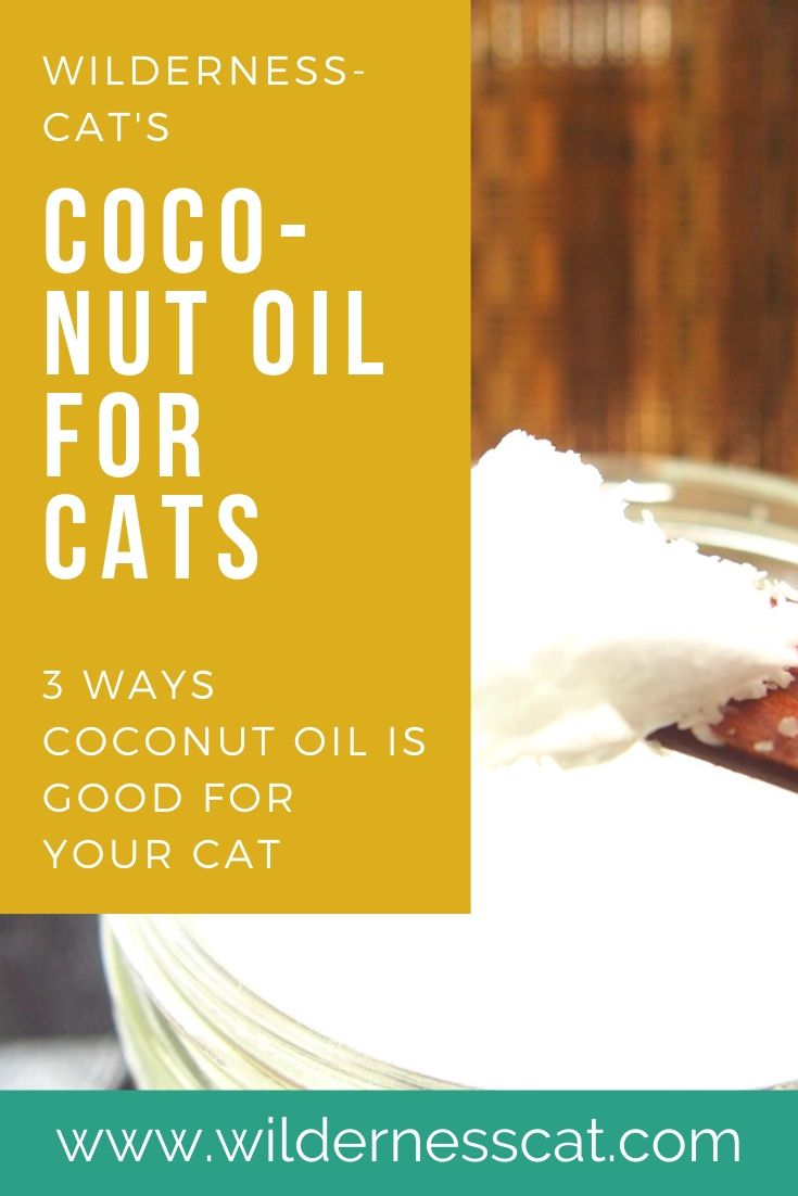is coconut oil good for cats pin 2