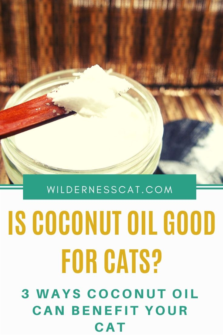 is coconut oil good for cats pin 1