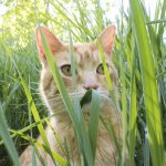Should You Let Your Cat Eat Grass?