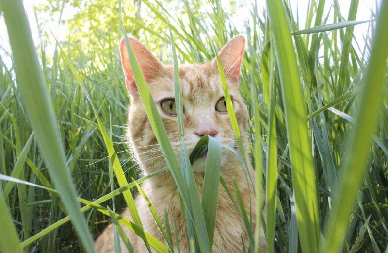 orange cat in grass adventure