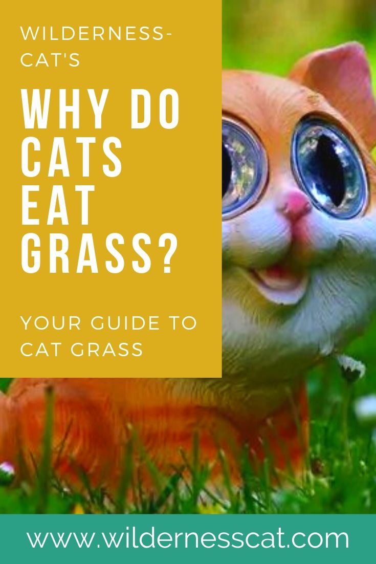Why do cats eat grass pin