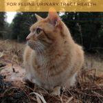 AppleCiderVinegar for Cats: FLUTD Home Remedy