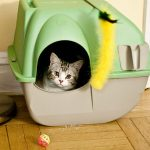 Is Corn Cob Cat Litter Good for Cats?