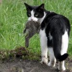 Is Raw Food Better for Cats? Healthy Raw Feeding for Cats.