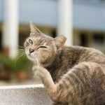 Cats With Dry Skin – Natural Remedies