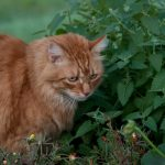 How to Grow Organic Catnip at Home