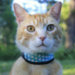 Wessie – Wildernesscat Pal