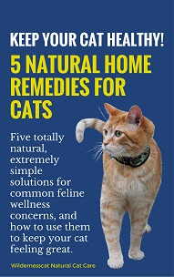 Wildernesscat 5 Natural Home Remedies for Cats