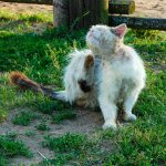 Cats With Dry Skin – Best Natural Remedies for Dry Skin in Cats