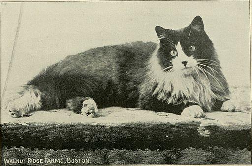 1898 cat