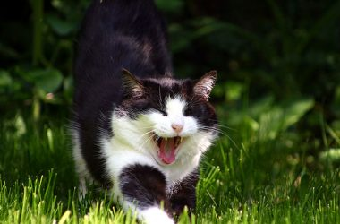 are probiotics good for cats