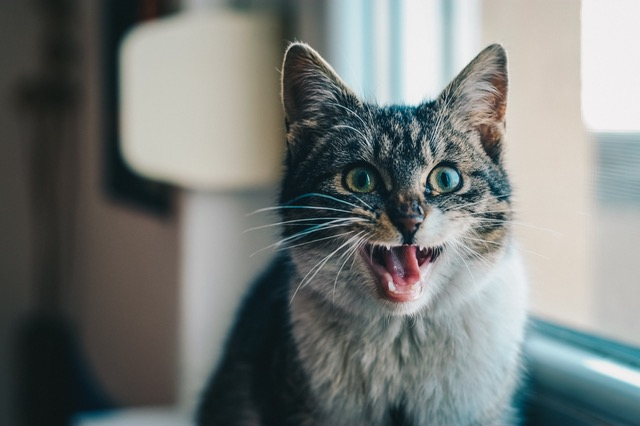 Everything You Need to Know About Dry Cat Food