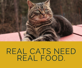 learn about cat nutrition