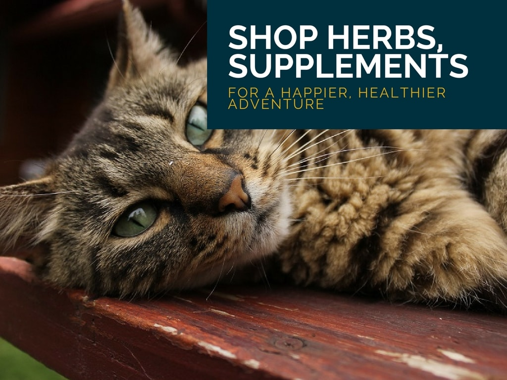 shop herbs and supplements for cats