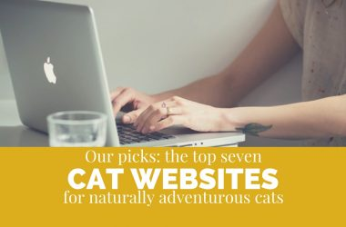 best cat websites for naturally adventurous cats