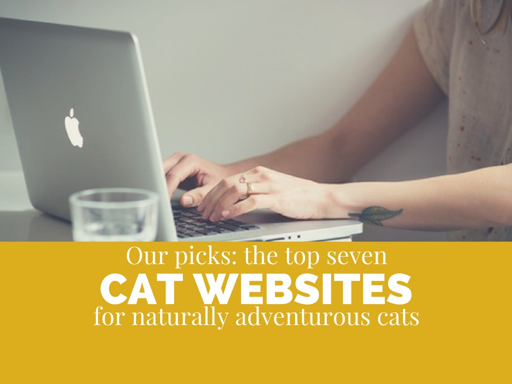 Top 7 Best Websites for Adventurous Cats