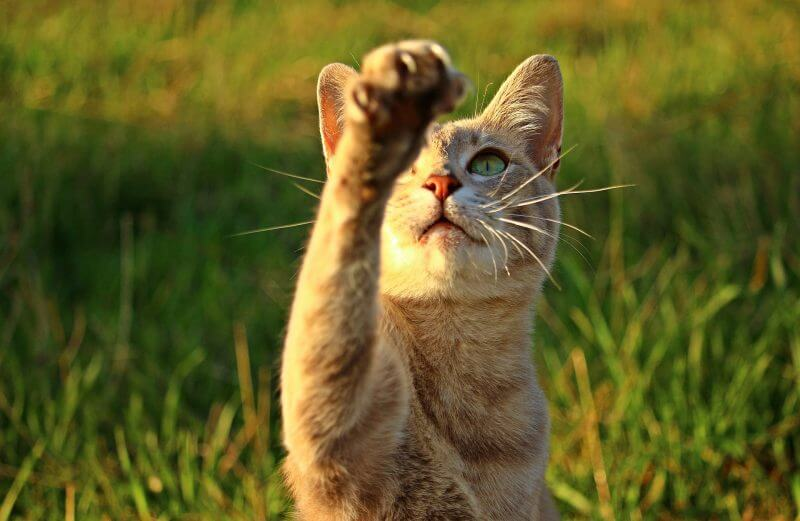 cat shake paws