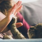 A Quick Guide to Clicker Training Your Cat