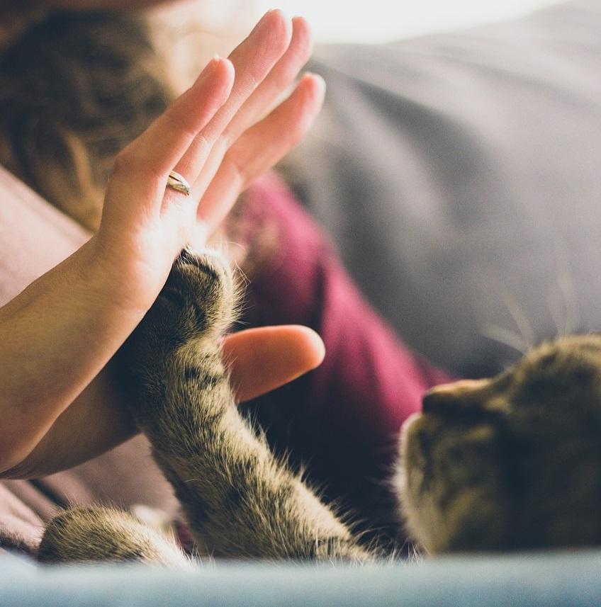 cat clicker training high five