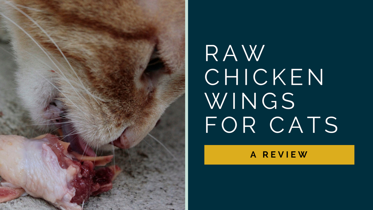 raw chicken wings for cats