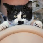 Traveling with Cats: Motion Sickness and How to Solve It