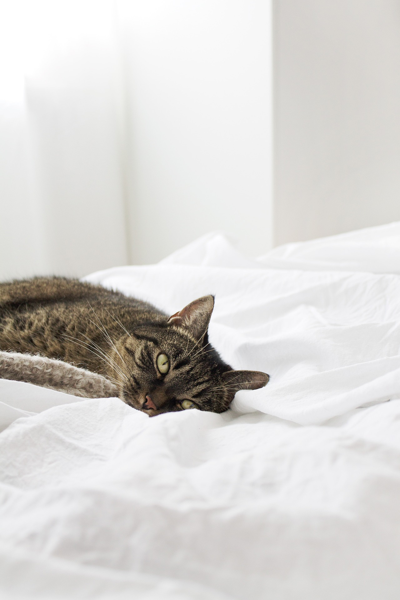 What are the Best Cat-Friendly Hotels? Our Top 4 Picks