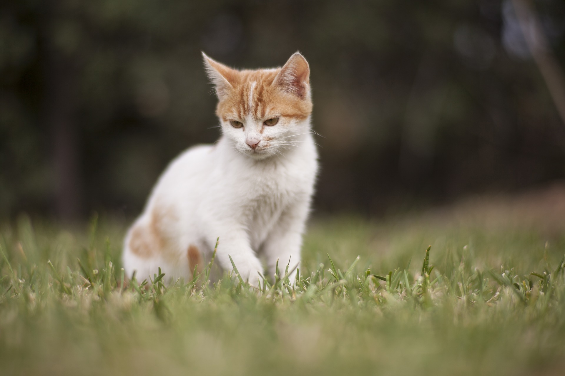 How Can You Tell if Your Cat is in Pain?