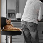 DIY Raw Cat Food: Why You Should Use a Raw Cat Food Supplement