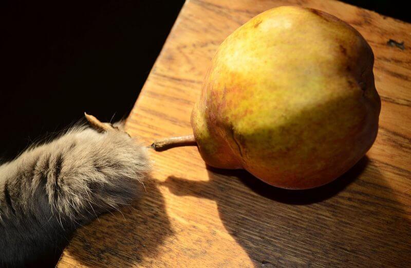 vegan cat pawing at a pear