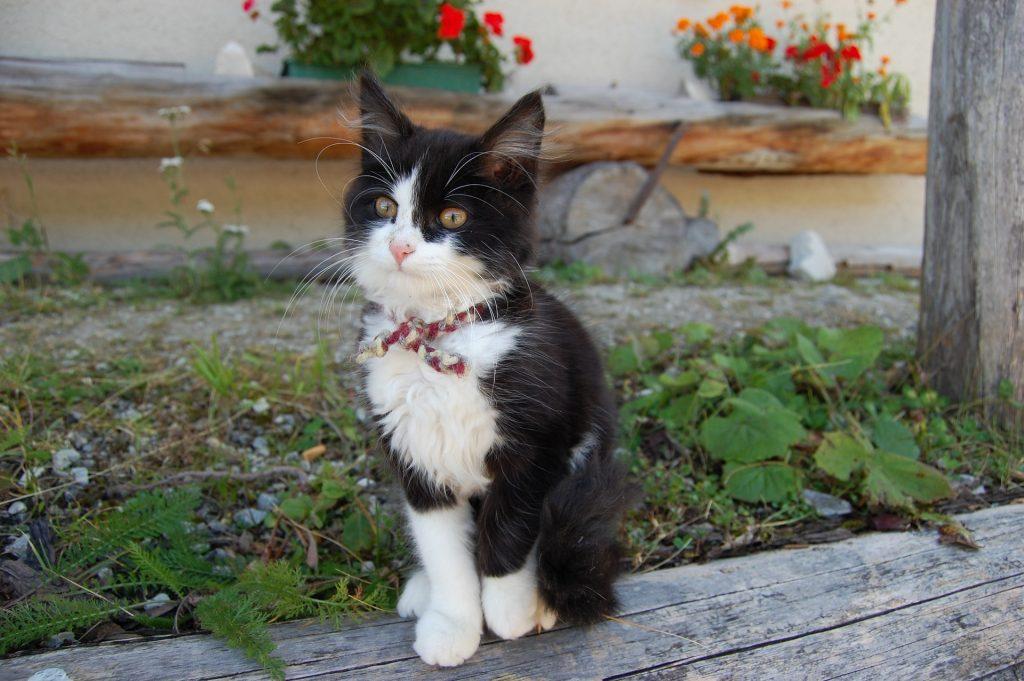 kitten pooping in garden