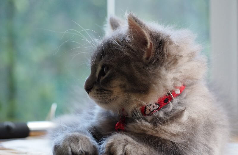 Best Food For Cats With Urinary Tract Infections