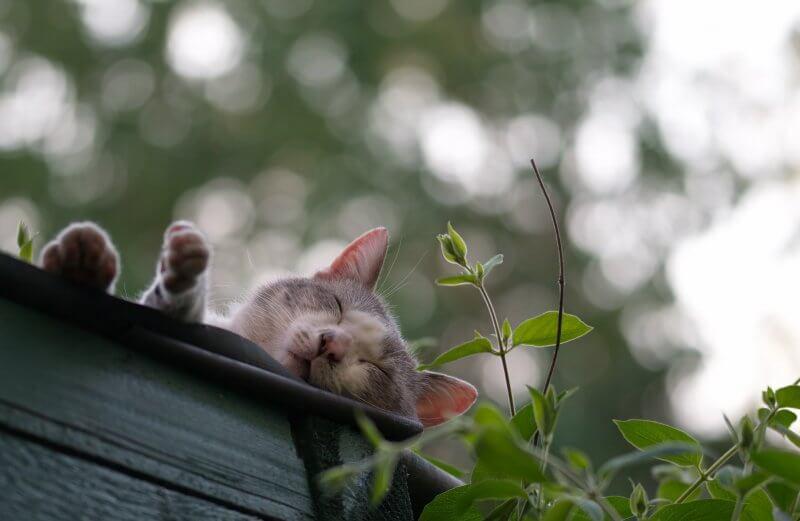 is marijuana safe for cats